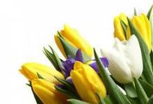 ՀՀ Գեղարքունիքի մարզպետ Կարեն Բոթոյանի շնորհավորանքի խոսքը Մայրության եւ գեղեցկության տոնի առթիվ